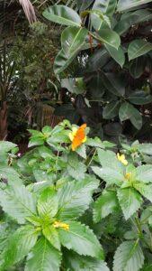 vlindertuin Klein Costa Rica