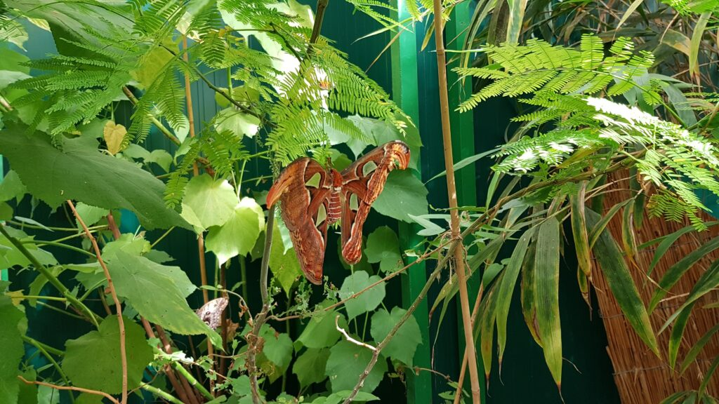 Vlindersafari Gemert